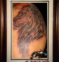 lion5_big