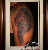 lion6_big
